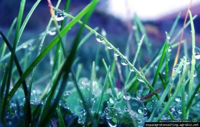Украина готовится к дефициту пестицидов - Agrobiz.net