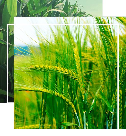 Продажа семян Степова Агро - Agrobiz.net