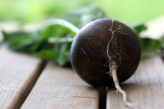 Витамины впрок: посев черной редьки для зимнего хранения - Agrobiz.net