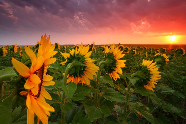 Стрессоустойчивость растений-путь к высоким урожаям - Agrobiz.net